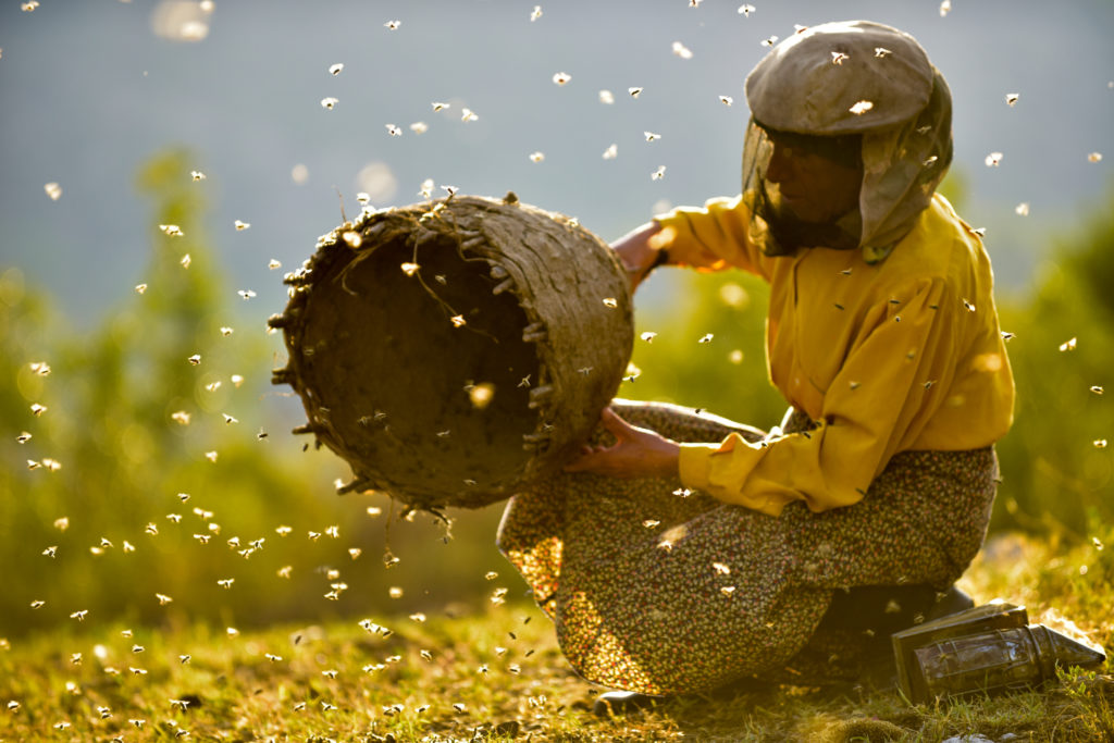 Honeyland | Tamara Kotevska, Ljubomir Stefanov | 2019 | Macedonia | Cert 12A | 87 min | Turkish with English subtitles | Documentary